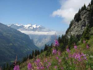 Het uitzicht over de prachtige Alpen
